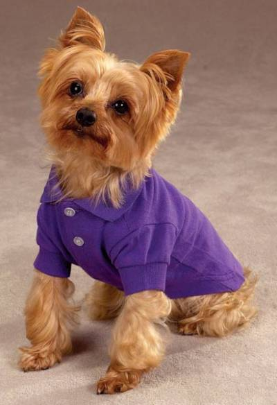 c3aa4da78 Ultra Violet. Zack & Zoey Polo Shirt with Matching Collar and Leash Set -  preppy cotton polo featuring